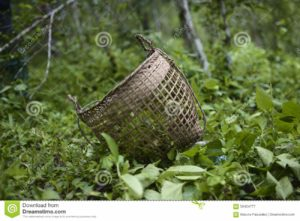 Jungle_Basket
